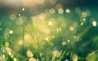Nuevas propuestas para la renovación espiritual en clave ecológica